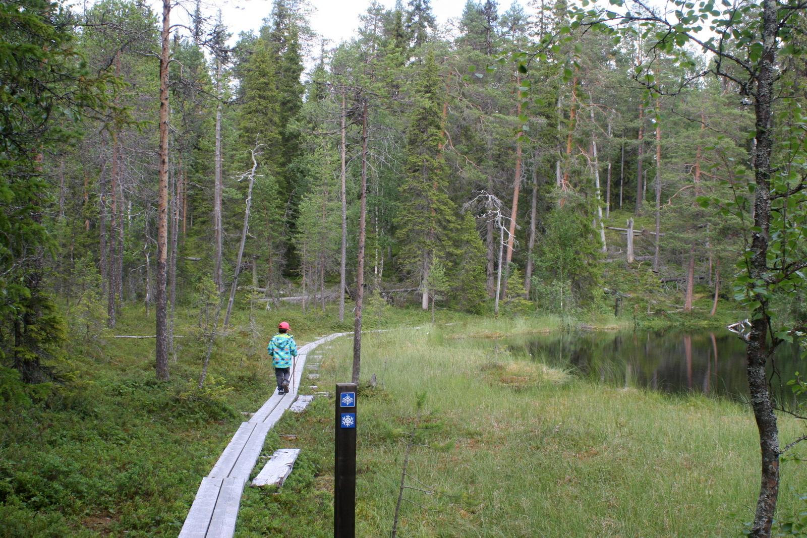 Oulangan kansallispuisto.  Pitkospuut - niitä lapset aina odottavat. Vaellus on lähestulkoon pilalla, jos niitä ei tule. Hiiden hurmoksen varrella sellaiset onneksi oli!