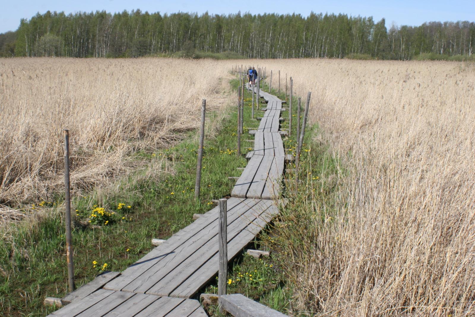 Lammassaari. Toukokuussa maisemassa törröttävät edellisvuotiset kaislat. Myöhemmin kesällä näkymä muuttuu toisenlaiseksi.
