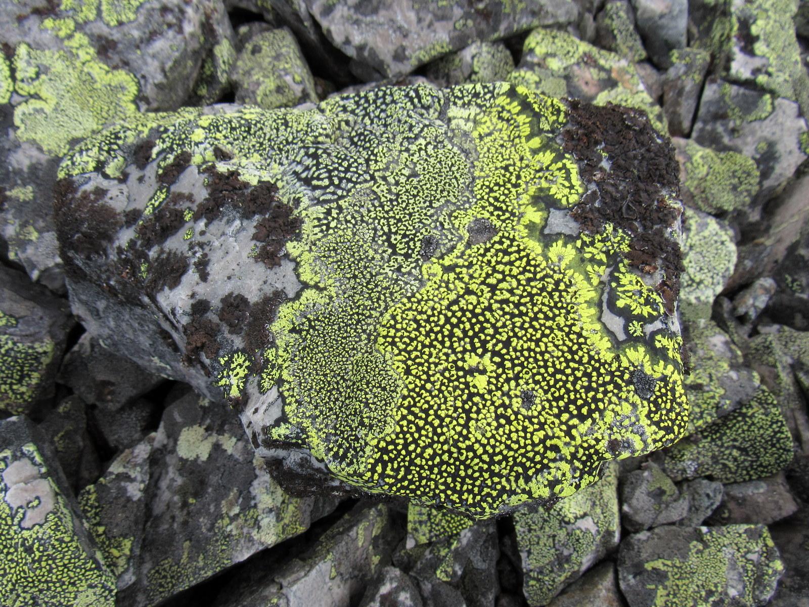 Kesänkitunturi & Pirunkuru. Vaikka en enää tässä vaiheessa kivien ylin ystävä olekaan, on myönnettävä: värit ovat aika kauniita.