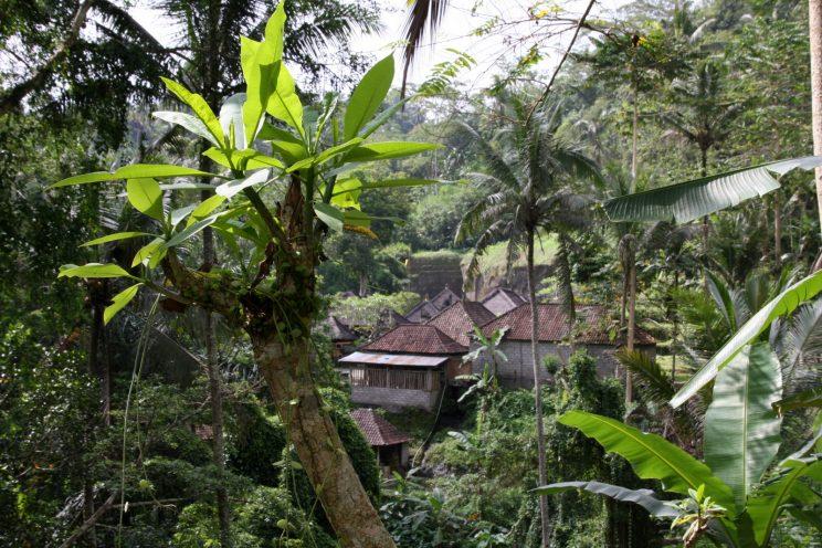 Kuvia Balilta. Näkymä Gunung Kawi -temppeliltä.