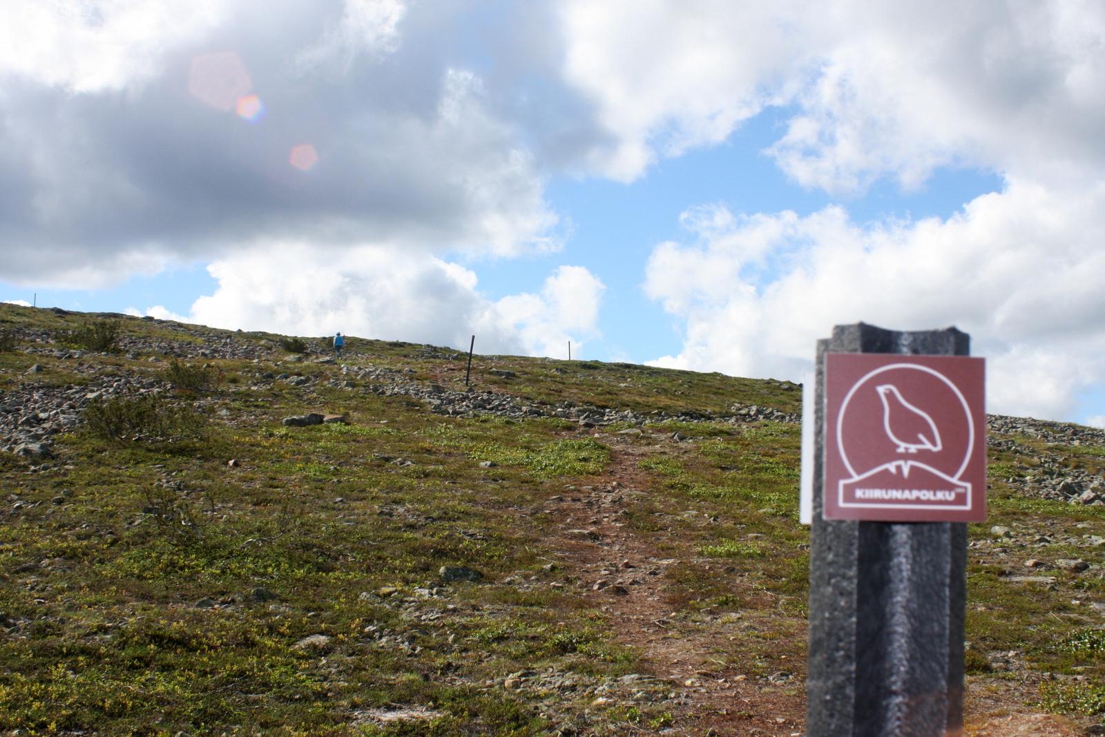 Saariselkä, Kiilopää. Viimeinen nousu huipulle. Matkaryhmän pienin on jo melkein perillä (sininen piste kuvassa).
