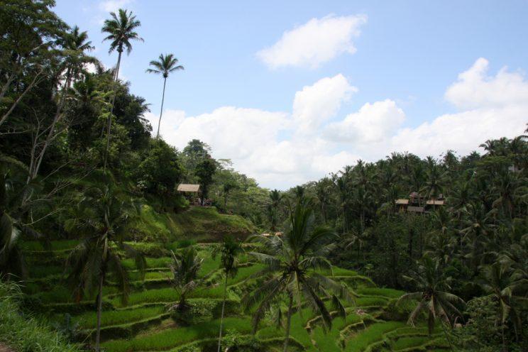 Kuvia Balilta. Tegallalang, riisiterassit.