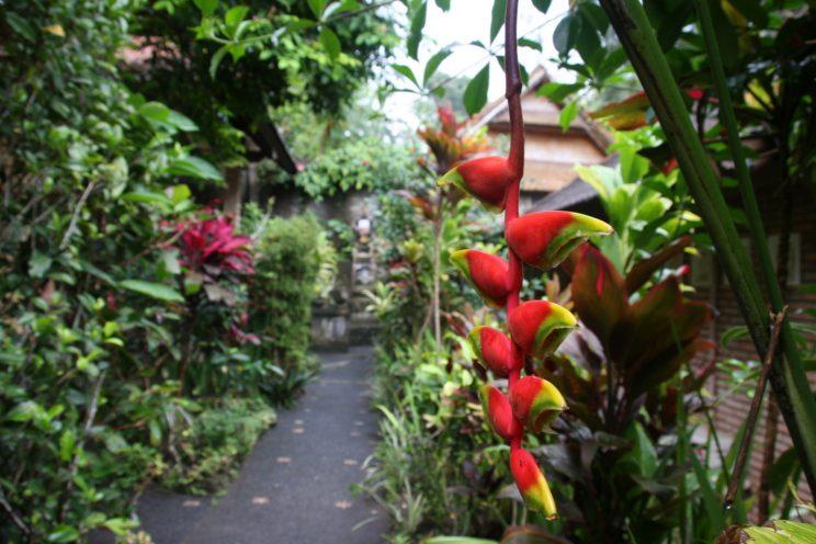 Kuvia Balilta. Ubud, Ani's Villas -hotelli.