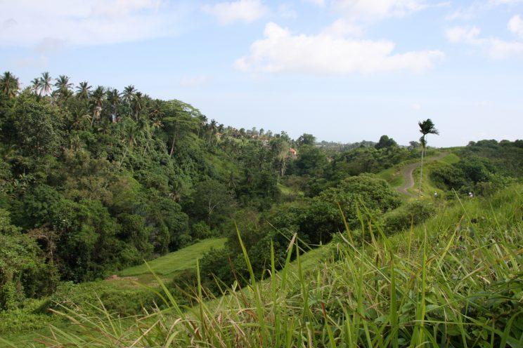 Ubud - Campuhan Ridge Walk