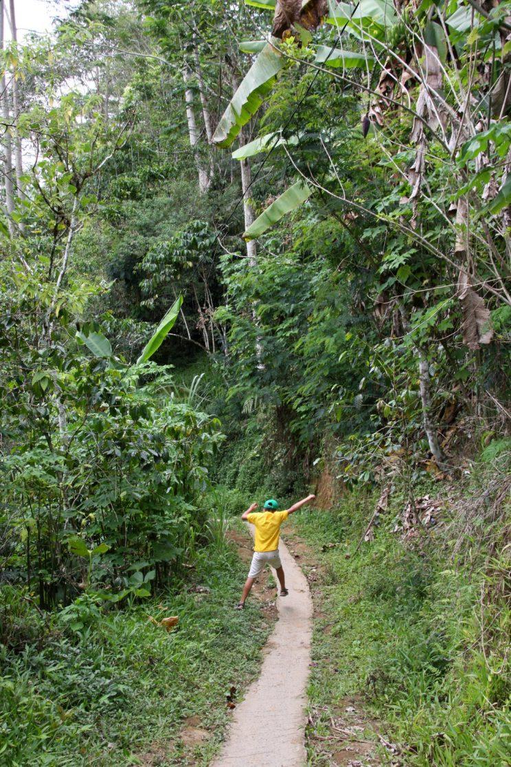 Bali vesiputous - Banyumala Twin Waterfall.