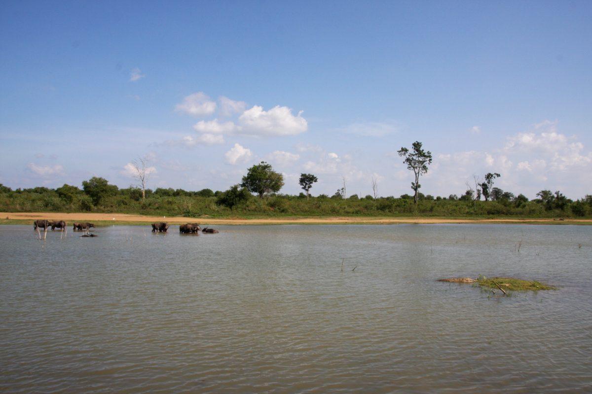 Safari in Sri Lanka - Udawalawe National Park