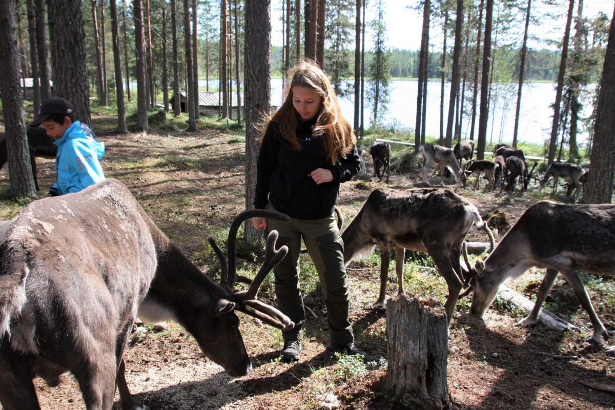 Sallan Poropuisto - Salla Reindeer Park